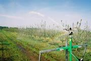 Praca sektorowego zraszacza deszczowni
